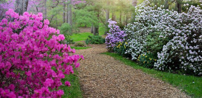 4 of the best gardens in Pembrokeshire